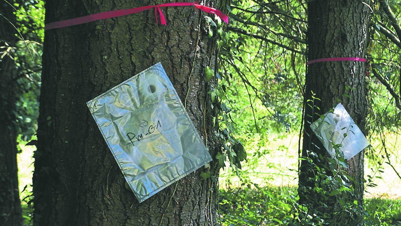 La gemme fournit de la térébenthine, généralement issue des liqueurs noires venues de l'industrie papetière, qui entre dans la composition des produits d'entretien, des encaustiques ou des insecticides.