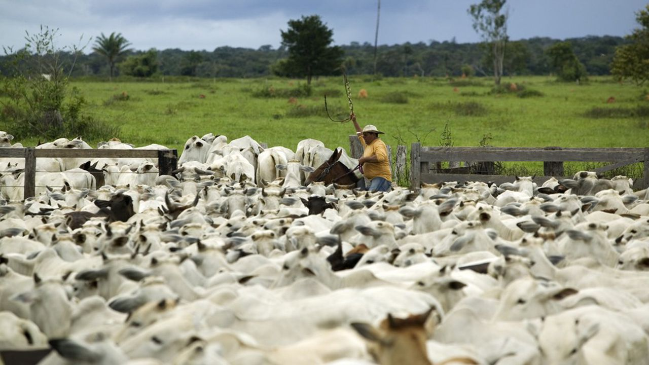 La déforestation pourrait s'accélérer annuellement d'environ 5% si l'accord UE-Mercosur voit le jour.