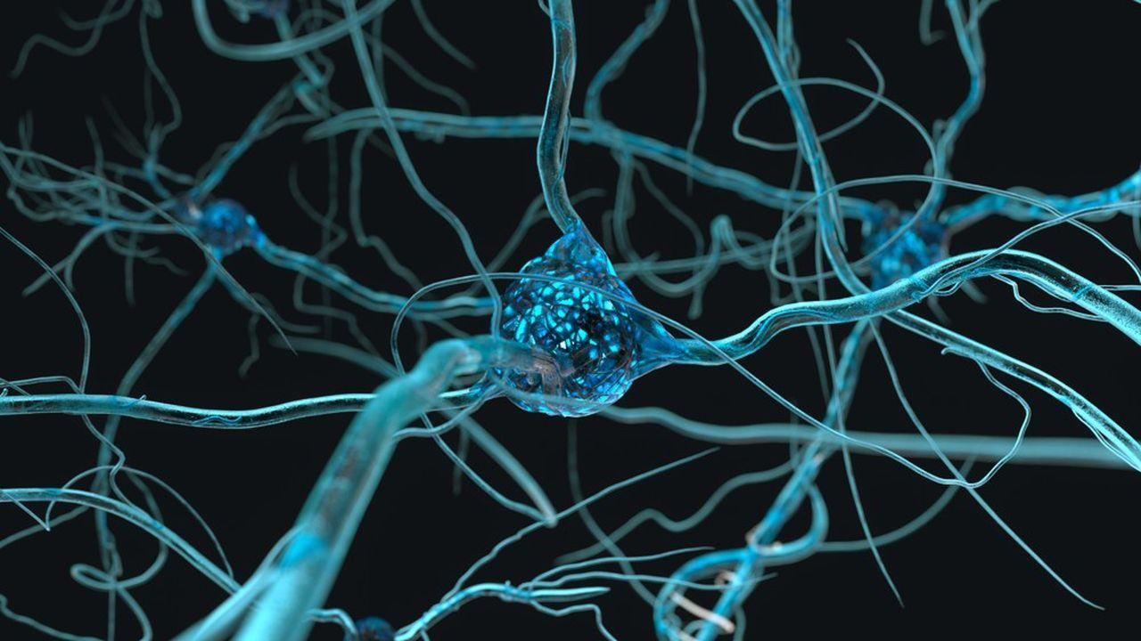 Comme pour le cerveau, plus une organisation est connectée entre elle, plus son réseau est dense, plus elle est agile et dotée de capacités de transformation et d'innovation.