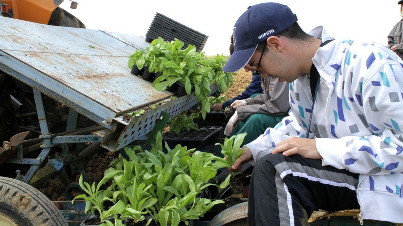 Dans l'Essonne, près de 80 travailleurs en situation de handicap produisent toute unne gamme de tisanes biologiques vendues ensuite par Naturalia.
