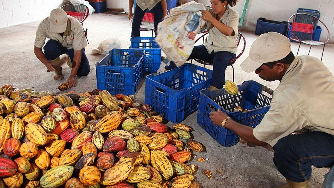 Ouvriers de la plantation de Pedregaln au Venezuela.