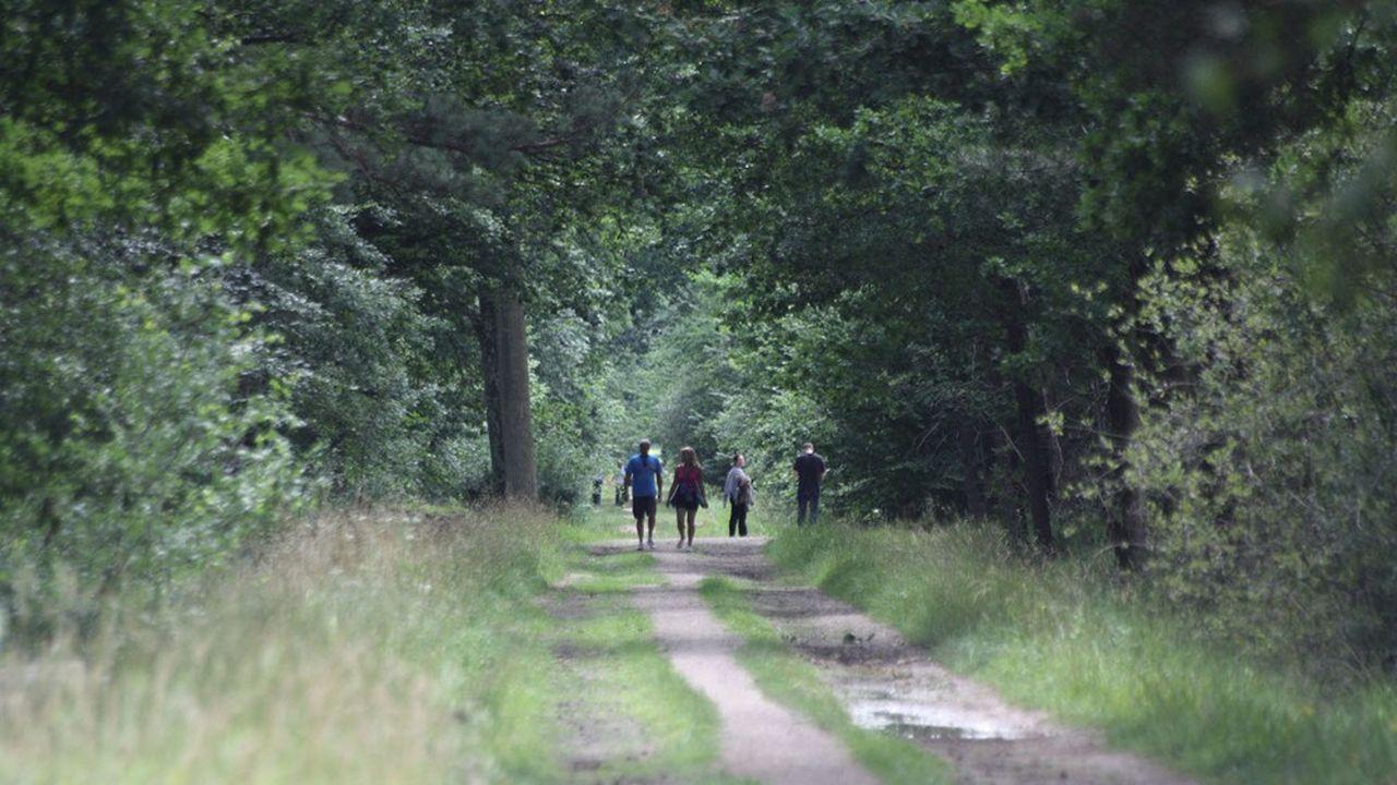 Forêt de la Grange : les maires obtiennent la suspension du chantier de l'ONF