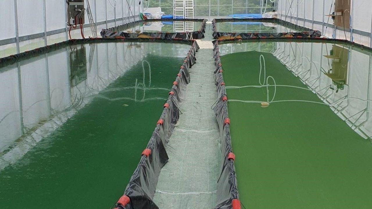 L'exploitation comporte quatre bassins de production de 80m2 chacun.