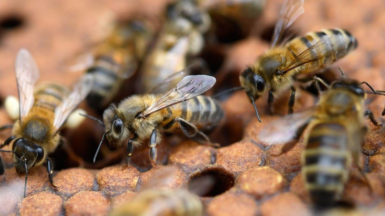 La méthode d'évaluation du risque létal des néonicotinoïdes sur les abeilles suscite d'âpres discussions entre les Etats de l'Union européenne.