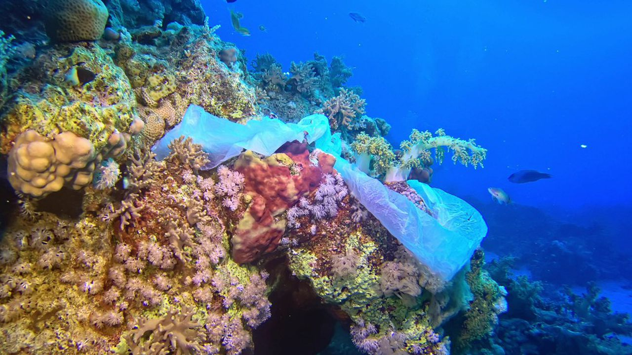 Le plastique est présent en quantité 30 fois plus importante au fond de l'océan qu'à sa surface.