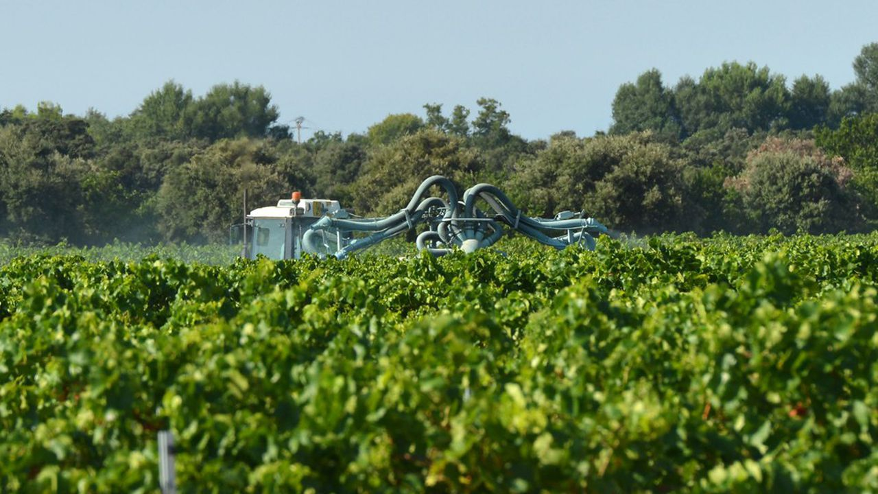 L'Anses maintient autoriser le recours au glyphosate dans les vignes, mais uniquement celles ayant la particularité d'être plantées en forte pente, sur des sols caillouteux, dans les vignes mères de porte-greffe. Par ailleurs, elle restreint fortement la dose maximale autorisée de cet herbicide.
