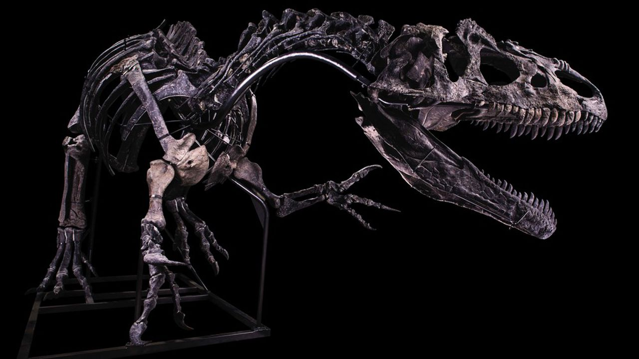 Le mardi 13octobre, cet allosaure de 10 mètres sera en vente à Drouot