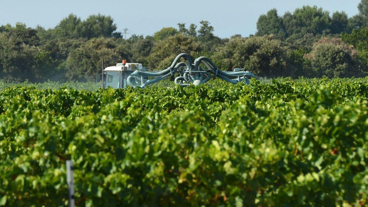 Les doses annuelles maximales de glyphosate diffusées dans les vignes vont se trouver réduites de 80% selon les règles que l'Anses vient d'édicter.