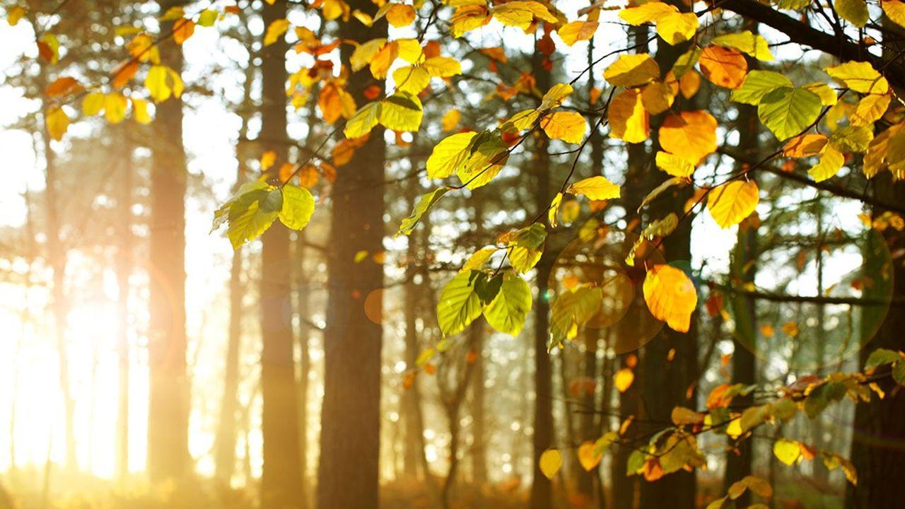 «Quoi de plus naturel que ce rai de lumière blanche filtrant à travers la ramure des arbres et, cependant, quoi de plus profondément mystérieux?»