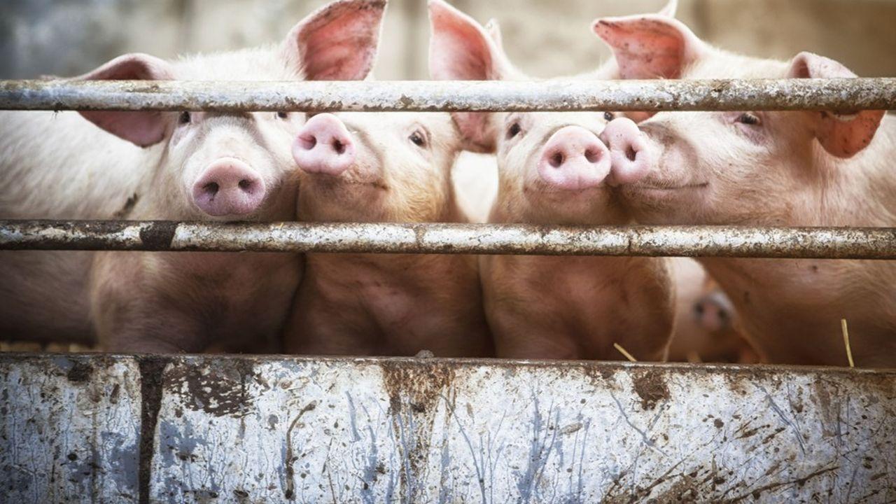 La Cooperl est le premier groupe coopératif spécialisé dans le porc en France. Elle est présente à tous les échelons de la filière depuis la génétique jusqu'à la fabrication de charcuterie salaison en passant par l'élevage et l'abattage.