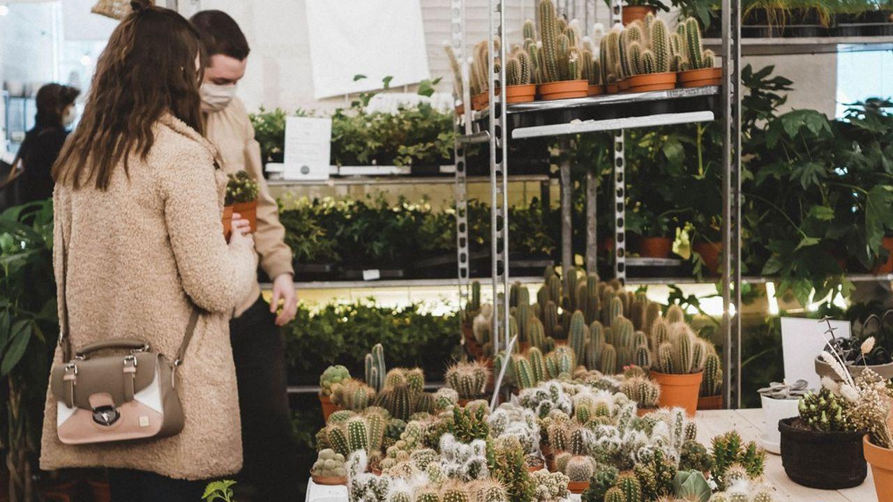 Que Cache Le Business Des Plantes Pas Cheres Les Echos Start