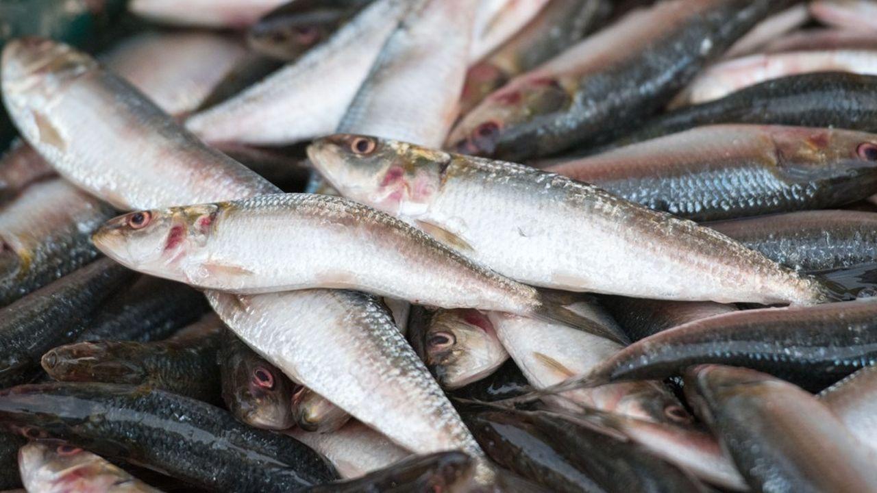 La pêche clandestine est une menace pour les ressources en poissons des océans.