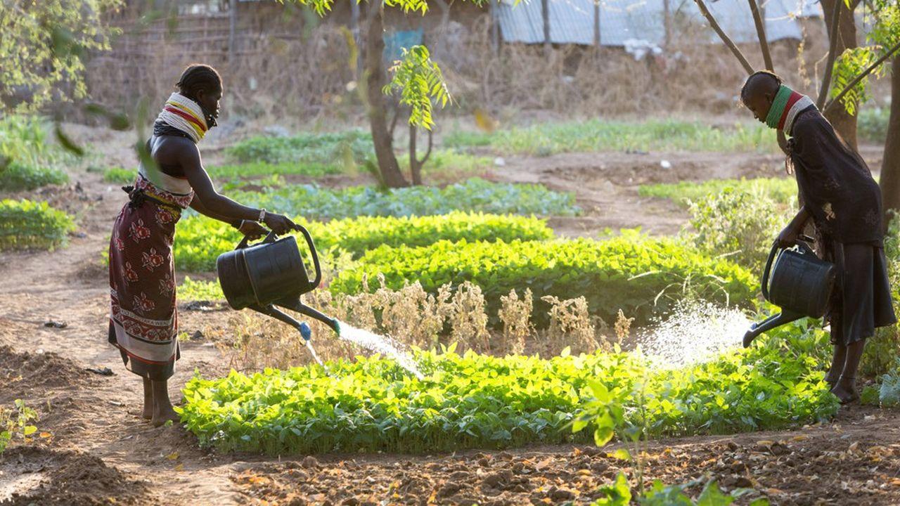 L'Allemagne est le premier contributeur européen avec 21,9milliards d'euros, soit 0,60% de son revenu national brut (photo: dans une ferme du Kenya, financée par la Gesellschaft für Internationale Zusammenarbeit).