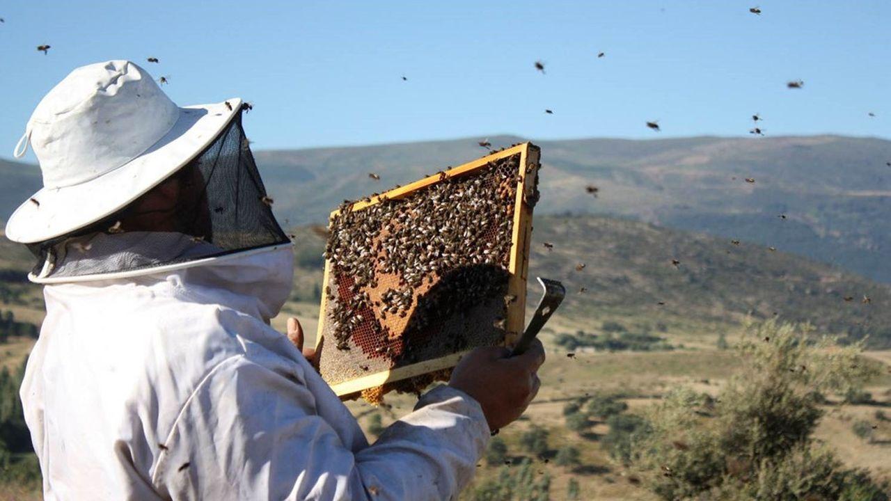 Avec ses 56.000ruches, la coopérative Les Compagnons du Miel collecte chaque année entre 6% et 10% de la production française.