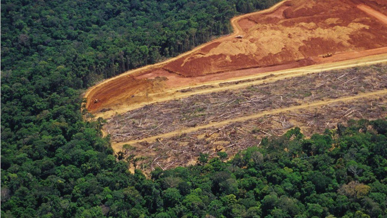 Au Brésil la déforestation vise à principalement cultiver du soja.