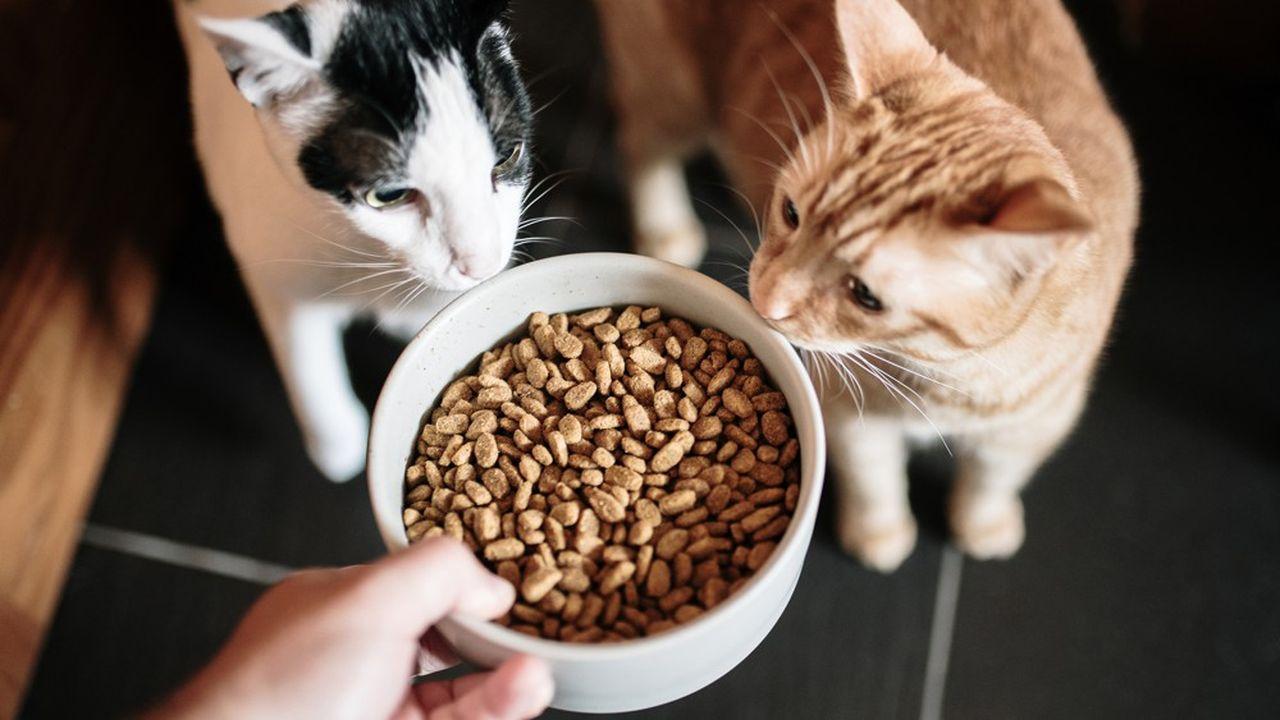Nestlé propose deux nouvelles recettes d'aliments secs contenant des insectes, du poulet et du foie de porc et des protéines végétales issues des féveroles et du millet.