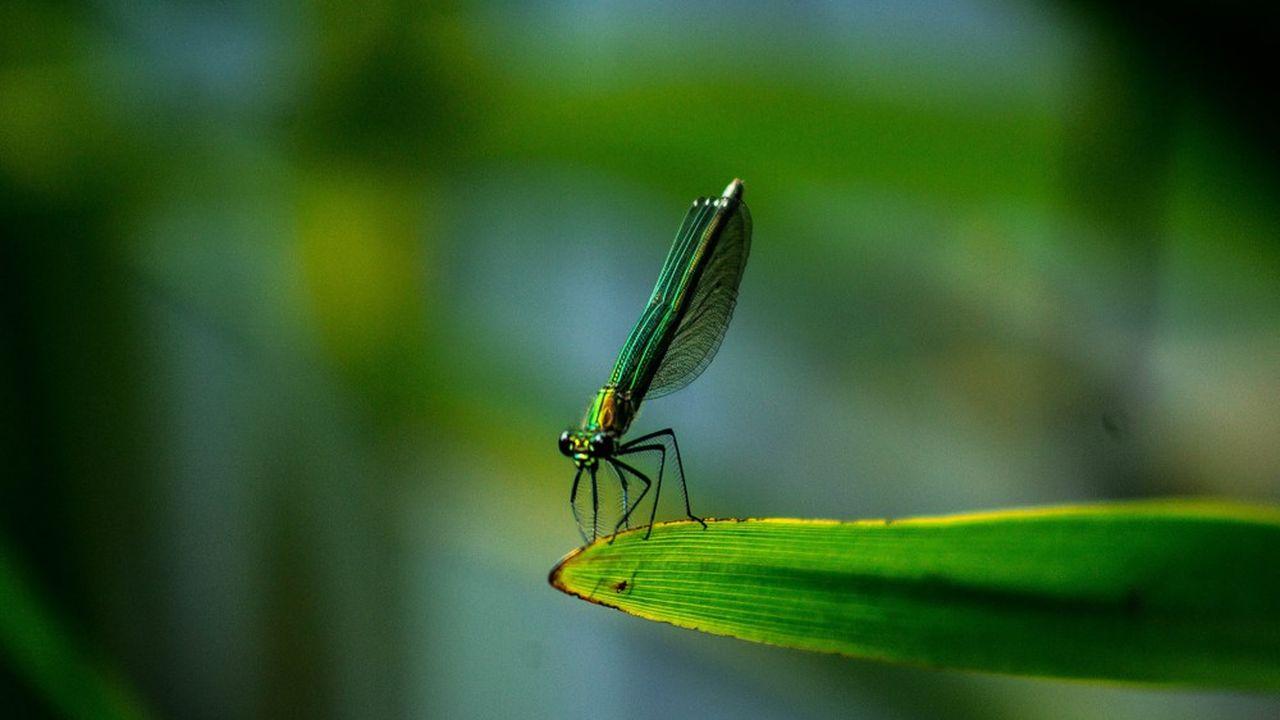 A partir d'observations dans la nature, la faune ou la flore, il est possible de trouver des applications bien concrètes.