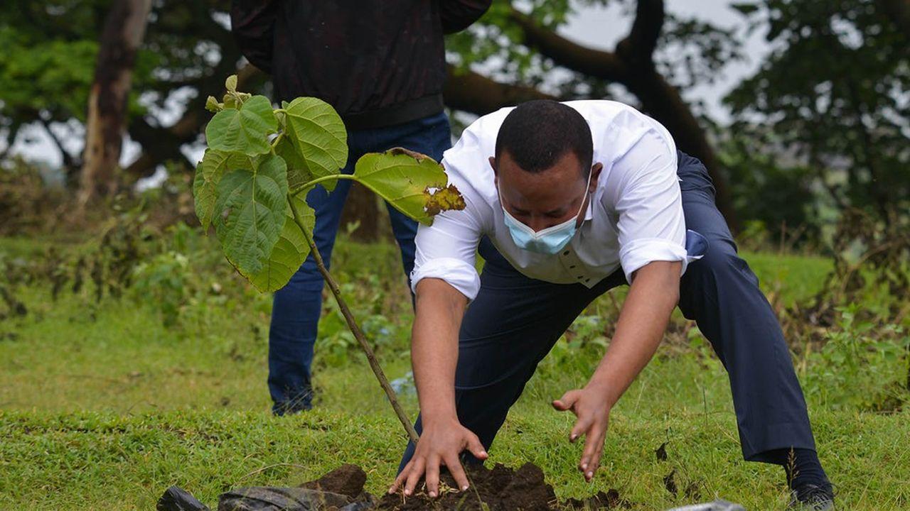 Le Premier ministre d'Ethiopie, Abiy Ahmed, plante un arbre dans le cadre d'un projet de reboisement massif portant sur 5milliards d'arbres. Hawassa, le 5juin 2020.