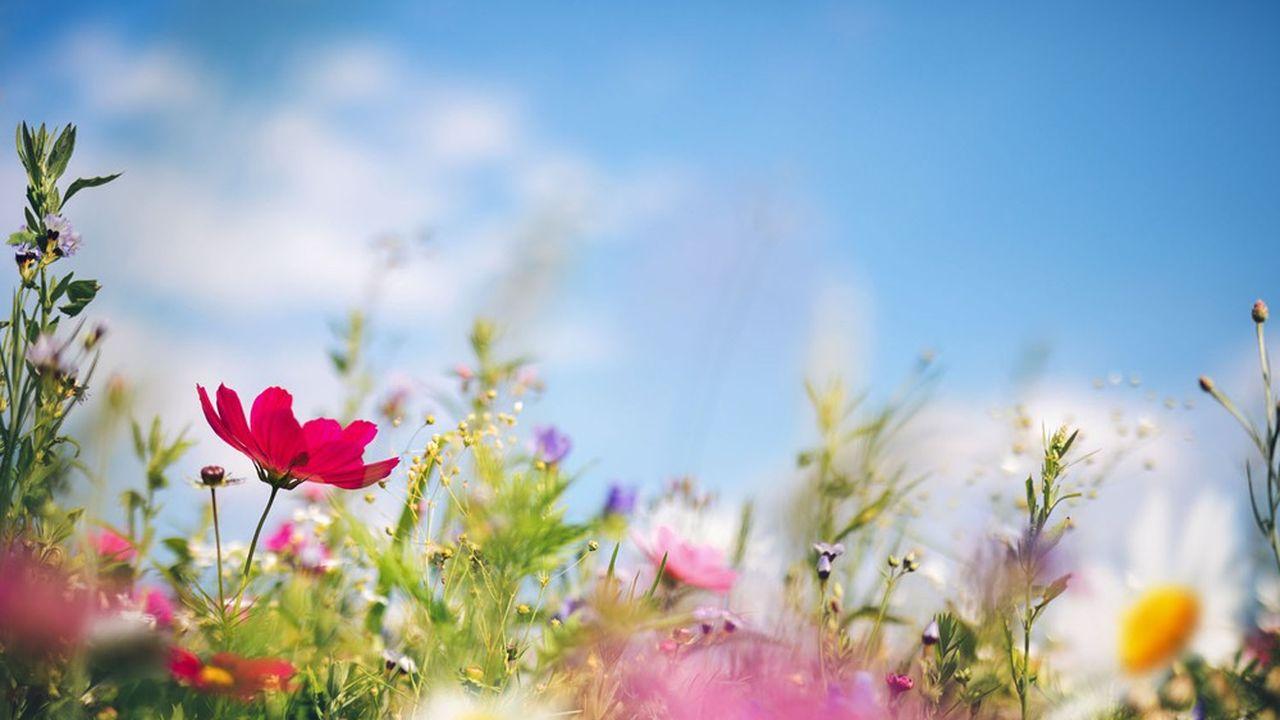 Les fleurs longues telles que les lys et les strelitzias sont bradées la moitié de leur prix.
