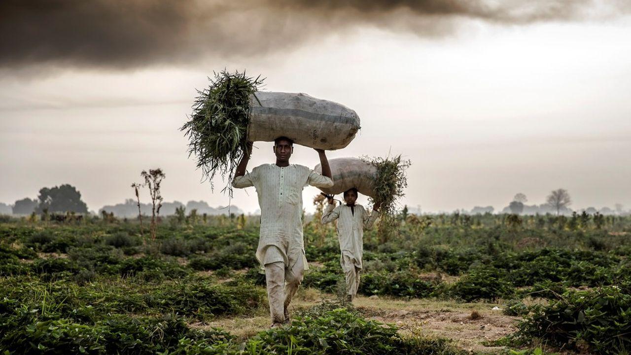 Les petits exploitants agricoles, qui produisent 50% des calories alimentaires dans le monde, sont particulièrement vulnérables aux conséquences du dérèglement climatique.