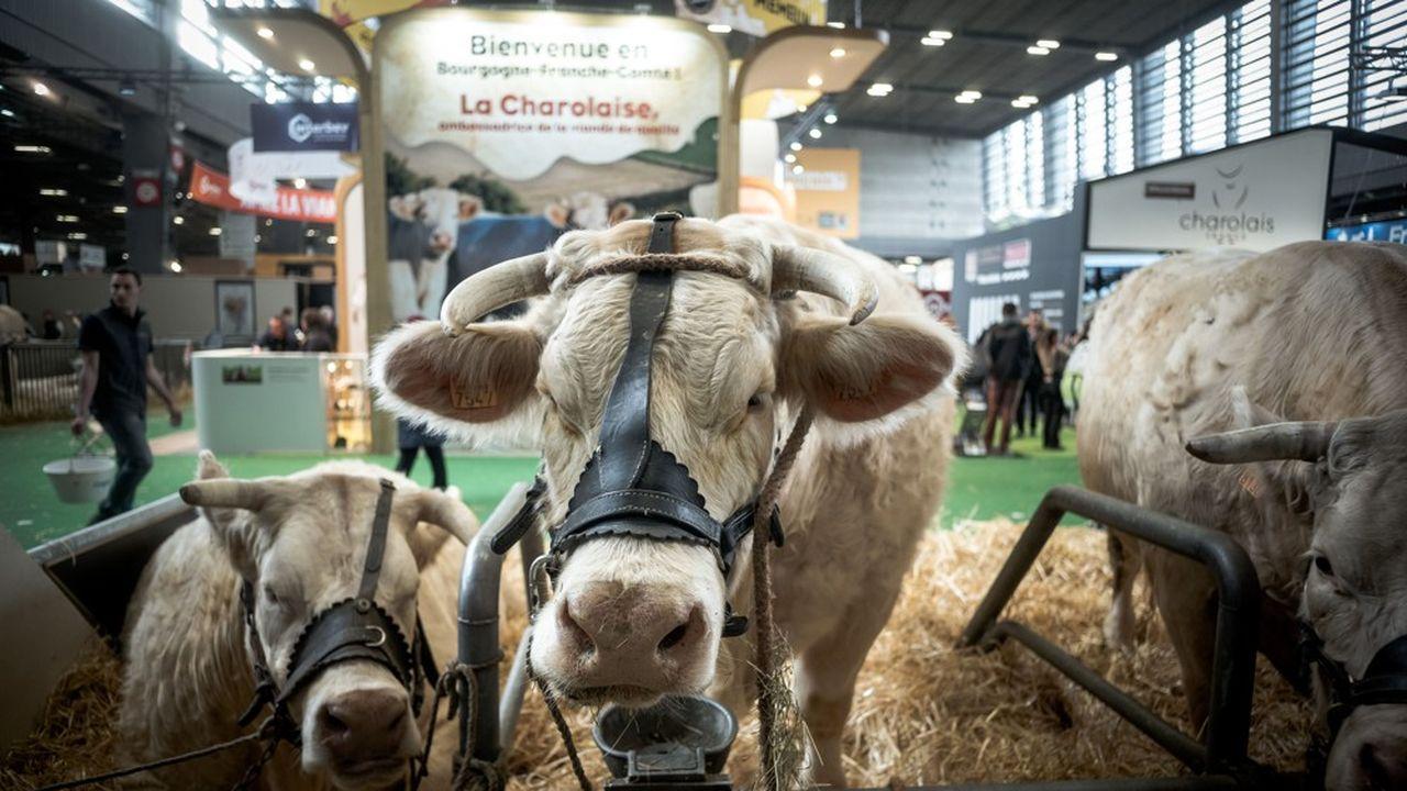 Comexposium, numéro trois mondial des Salons, dont celui de l'Agriculture, a été placé sous sauvegarde fin septembre à cause du choc de la crise sanitaire.