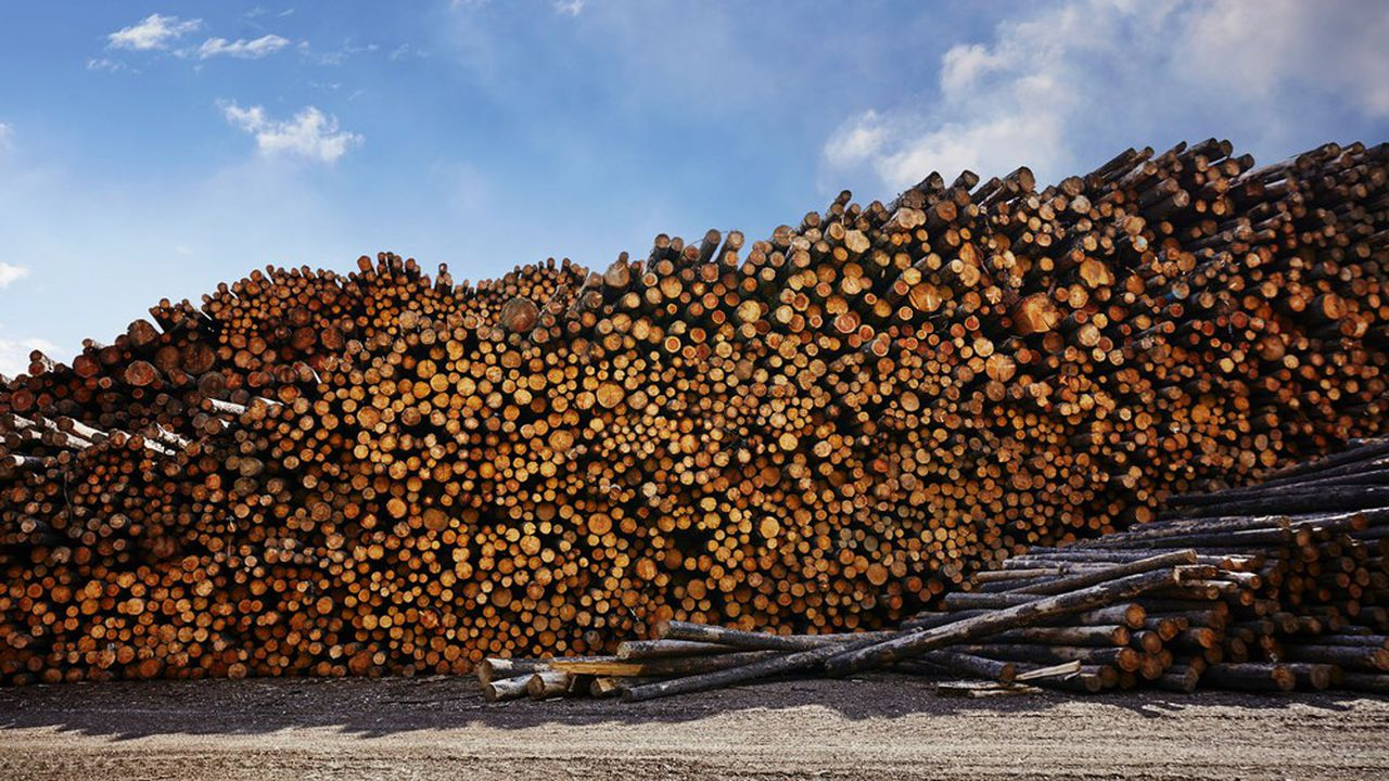 Les engagements des 28 acteurs engendreront une demande de bois de 300.000 mètres cubes d'ici 2025.
