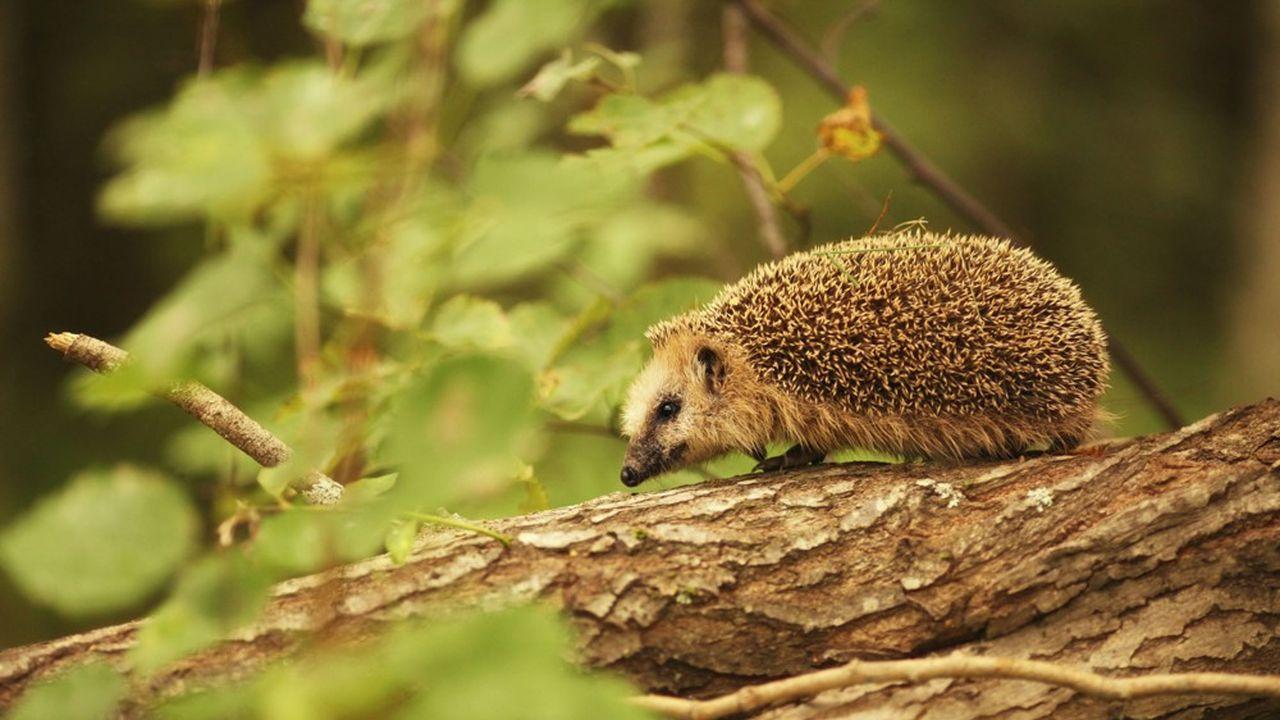 Les projets de Tervalia favorisent la préservation des écosystèmes et leur biodiversité.