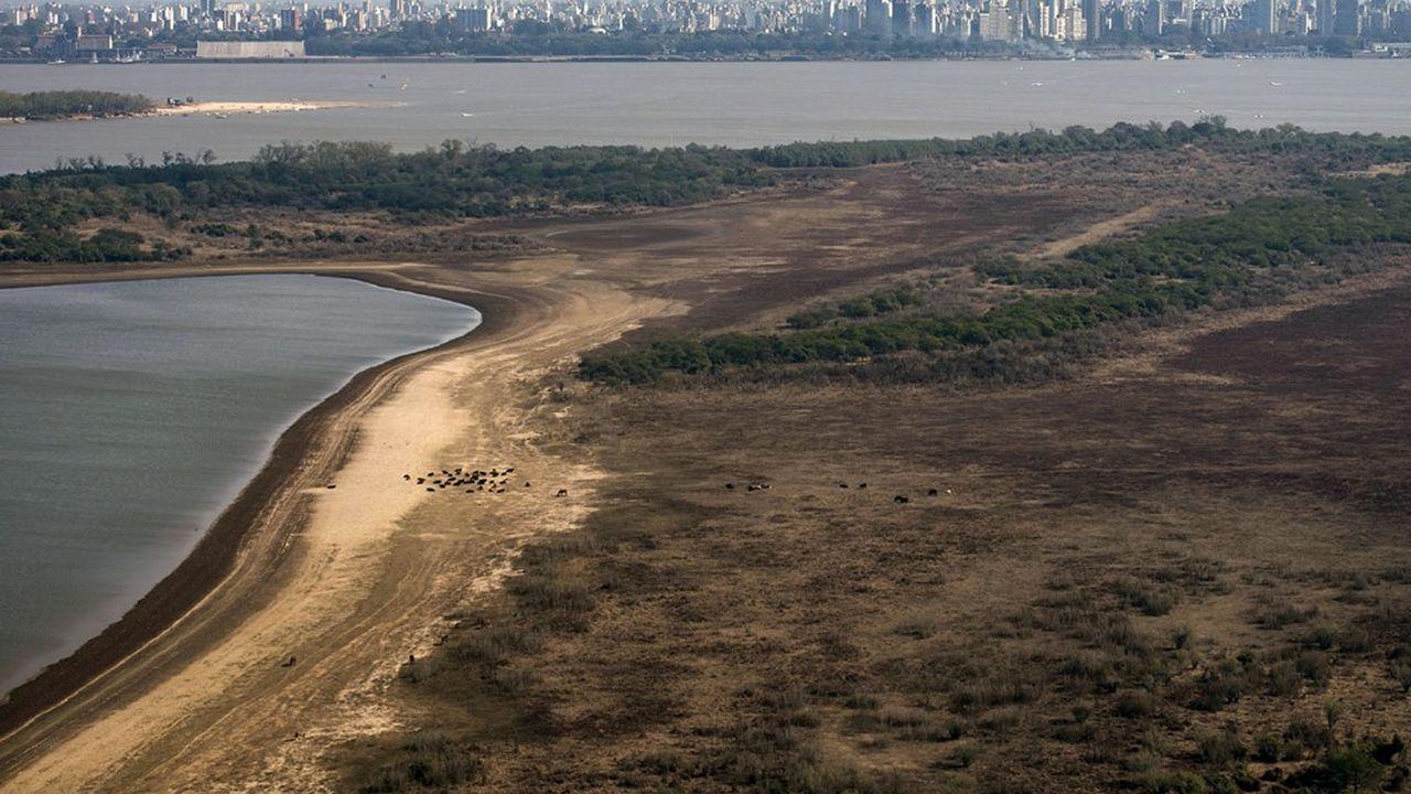 Le delta de la rivière Parana, en Argentine, victime de la sécheresse.