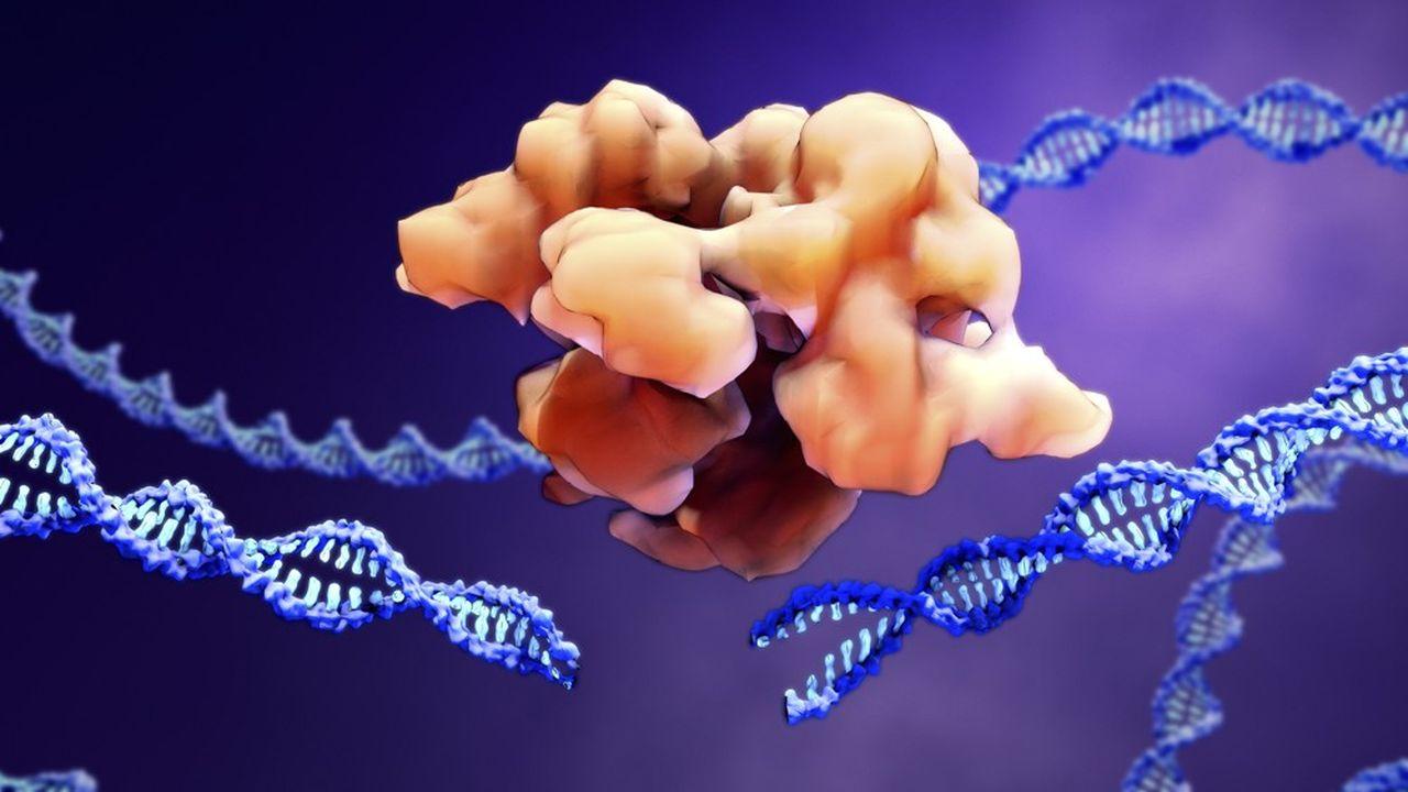 «Créé en 2012, le CRISPR-Cas9 est une technique d'édition du génome qui permet de supprimer ou d'ajouter des fragments de matériel génétique avec une grande précision.»