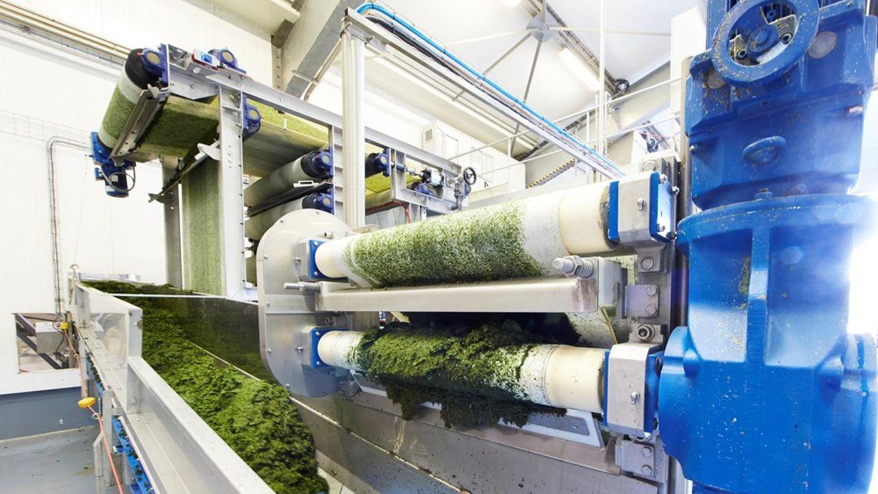 Les molécules extraites des algues sont utilisées notamment dans l'alimentation animale pour limiter l'usage des antibiotiques.