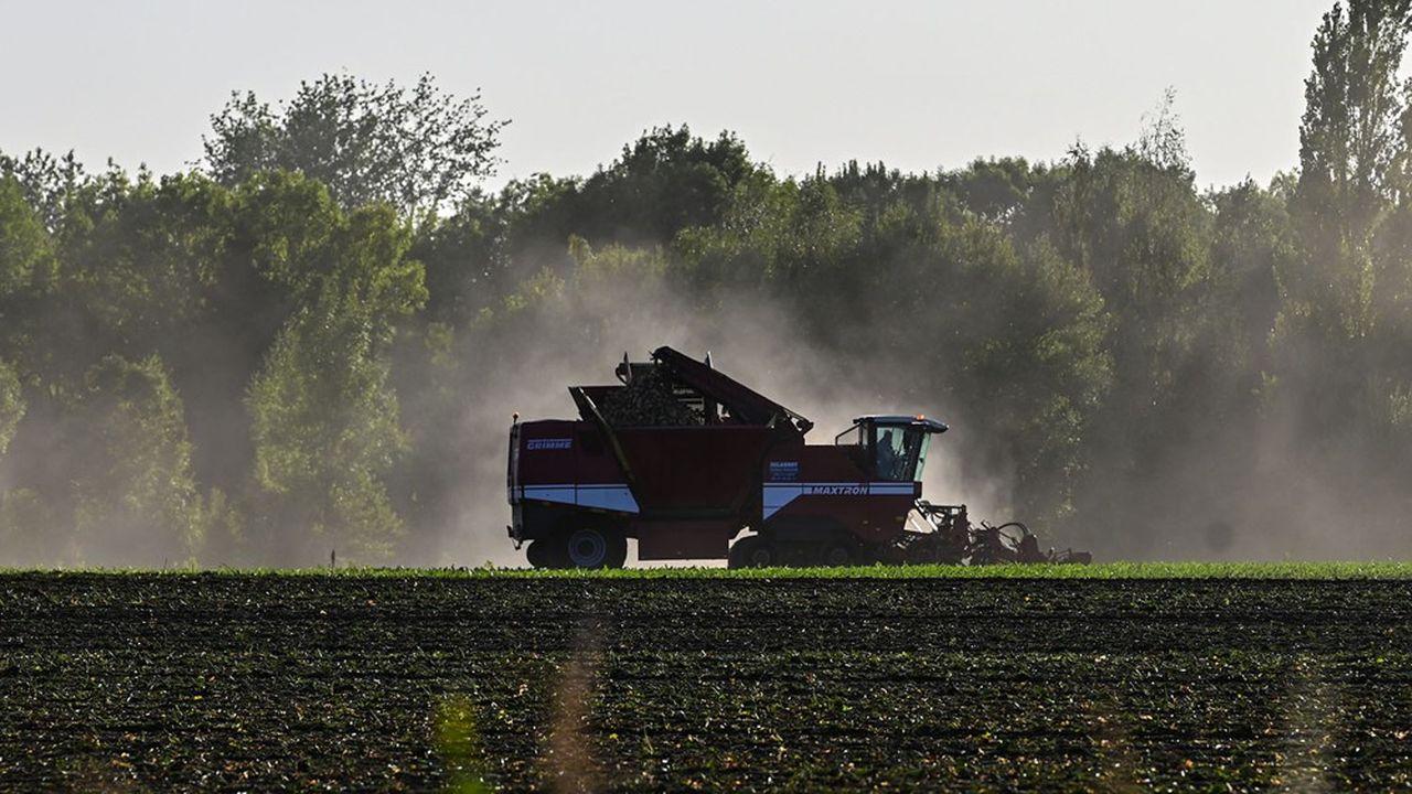 Tereos, ex Béghin-Say, deuxième groupe sucrier mondial, a amélioré sa rentabilité et ses capacités d'exportation depuis la suppression des quotas sucriers en 2017.