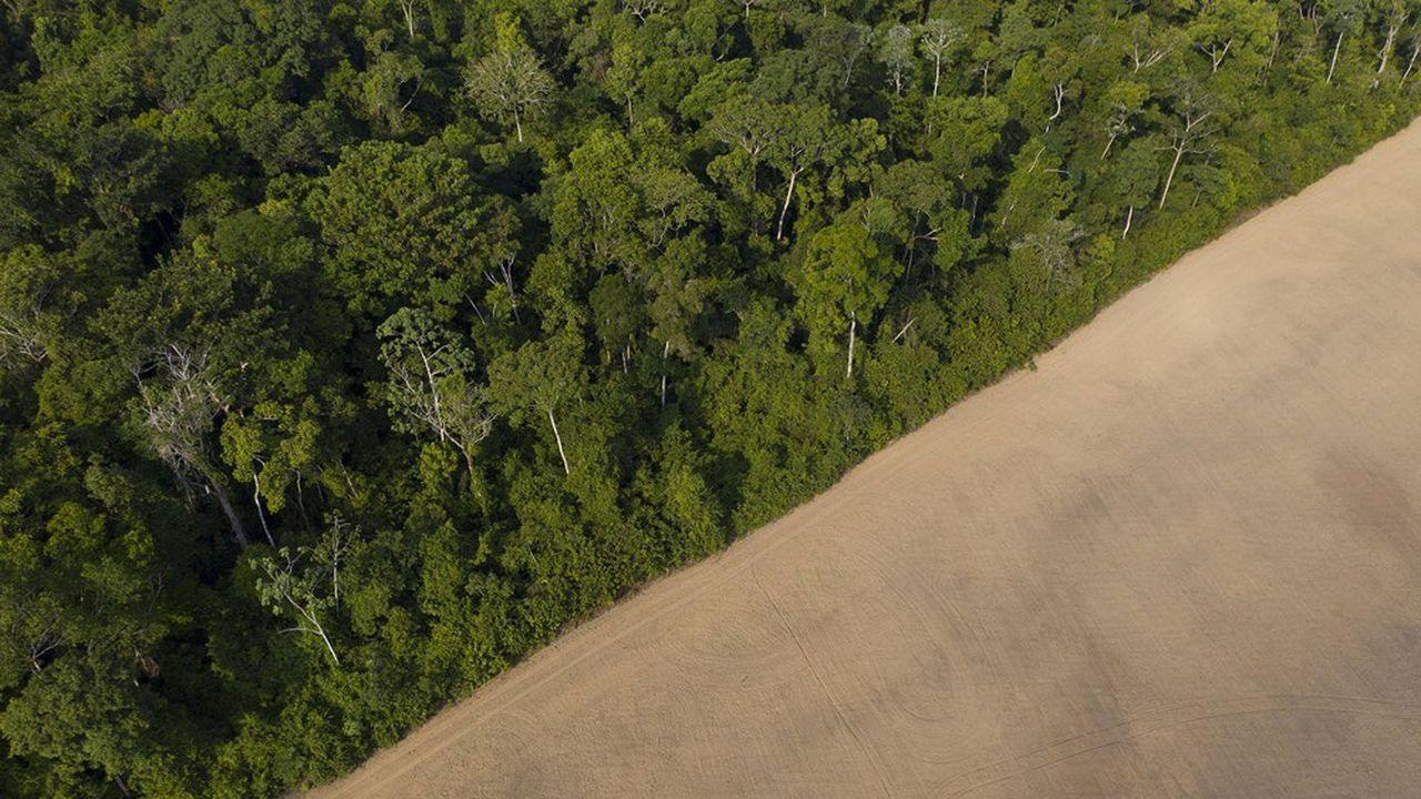 Dans l'état de Para au Brésil, la culture du soja gagne sur la forêt.