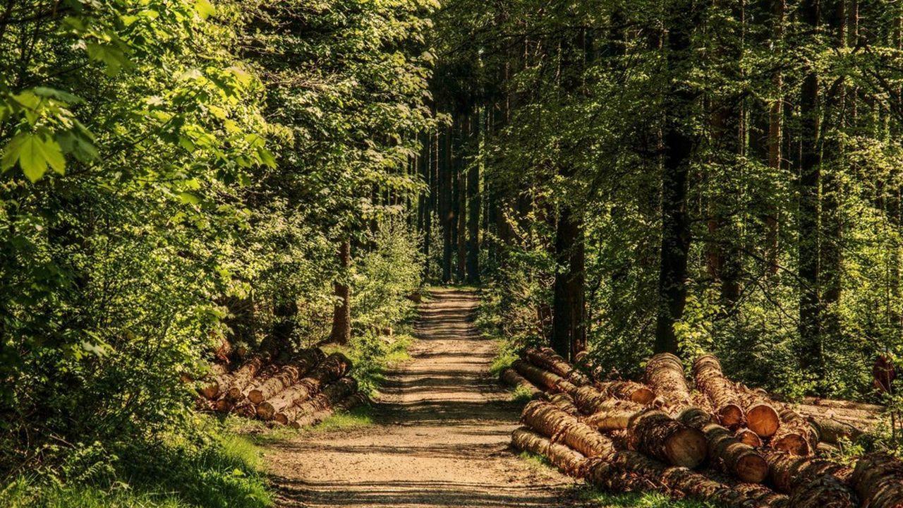 Piveteau est spécialisé dans les essences de pin et de douglas