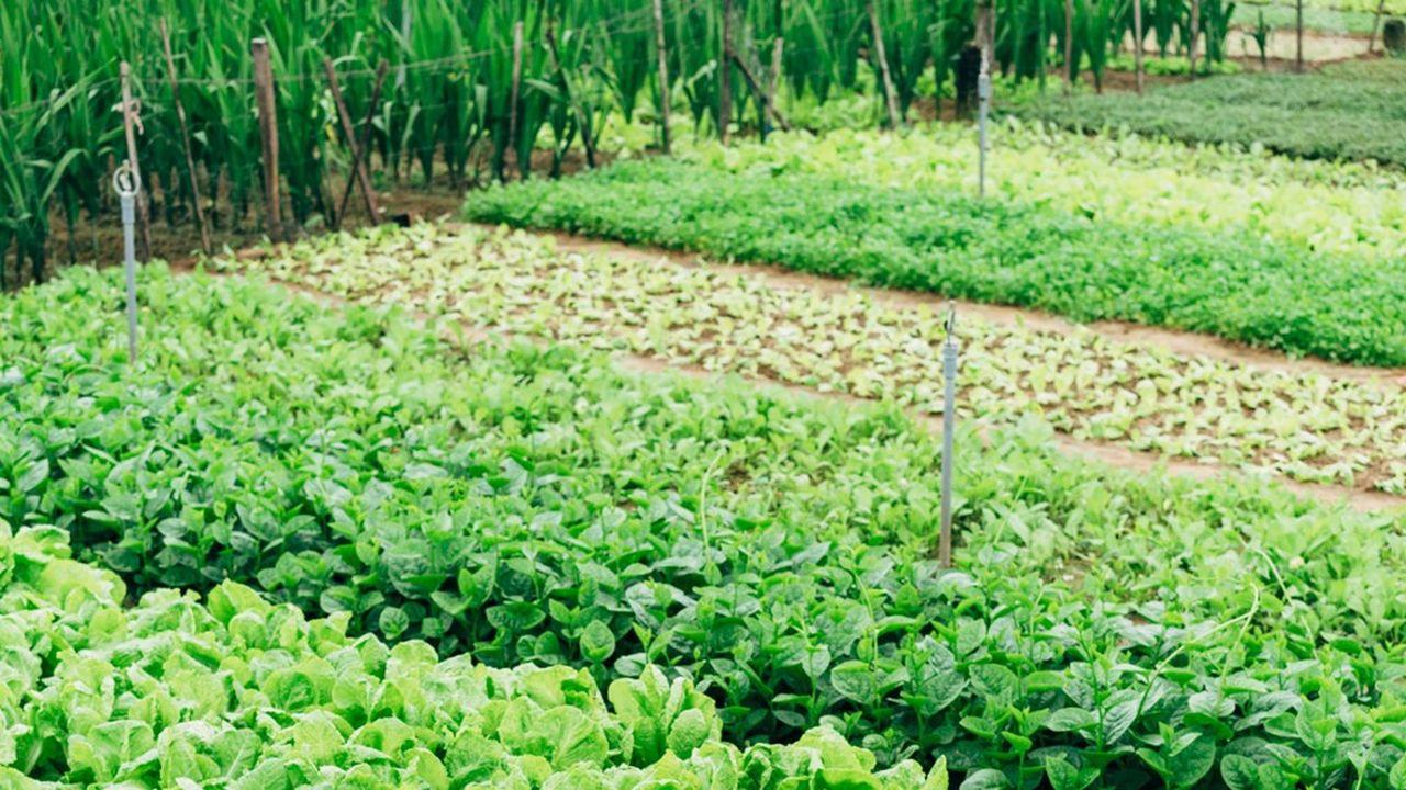 A Taverny, Bessancourt et le Plessis-Bouchard, les premières récoltes sont attendues d'ici deux à trois ans