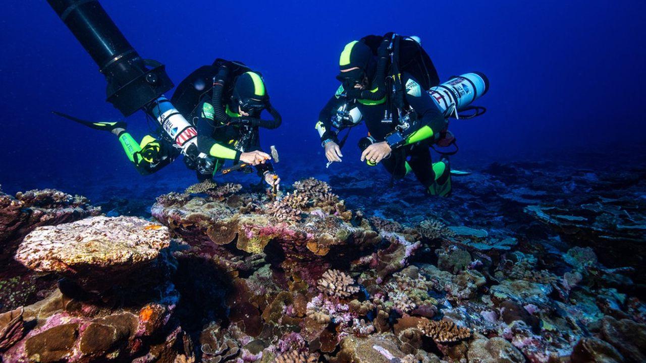 Après deux semaines de workshop avec les scientifiques du CRIOBE pour se préparer au programme scientifique «Deep Hope» ayant pour but l'étude des coraux mesophotiques (coraux profonds).