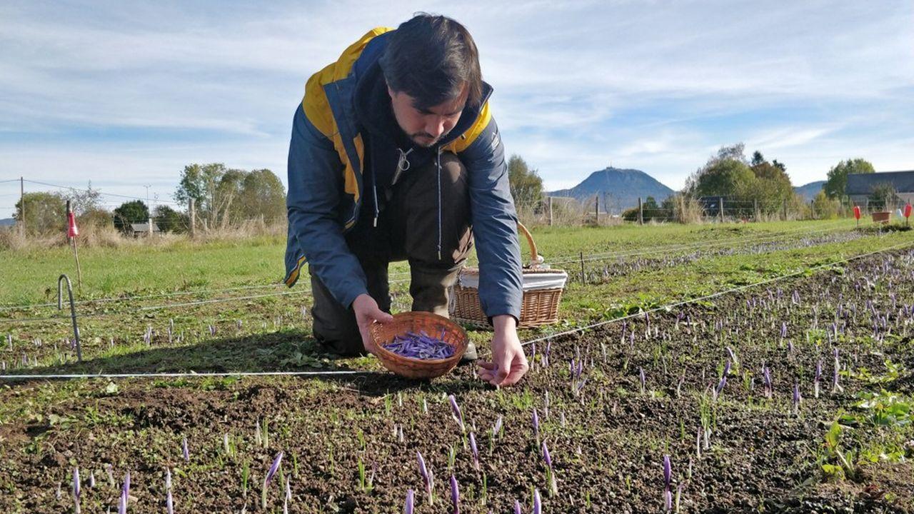 Après cinq ans dans le web marketing, Christopher Baur a rejoint son père pour cultiver du safran en Auvergne.