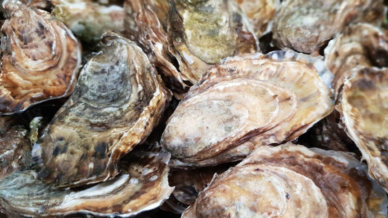 L'huître vendéenne compte pour 7,5% en valeur dans le marché national de l'huître