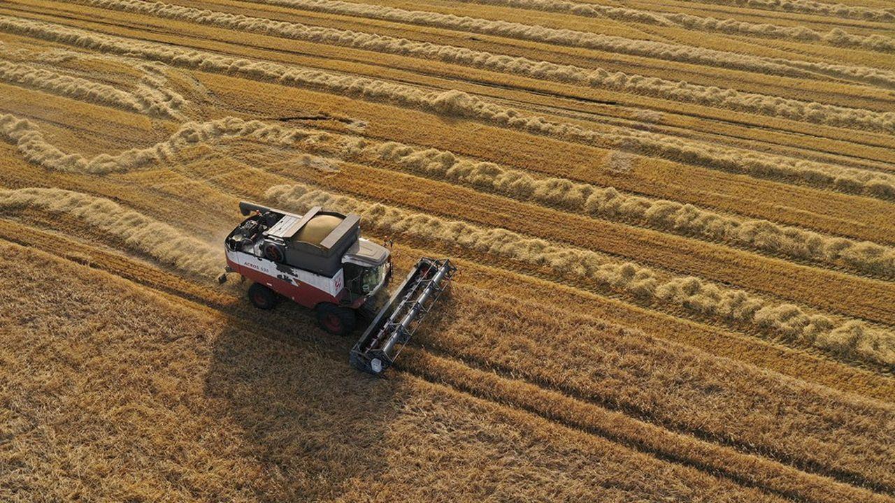 Un champ de blé en Russie