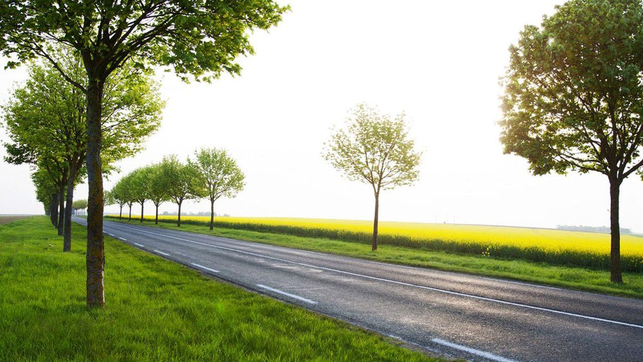 2.300 arbres vont être plantés le long de la départementale 19
