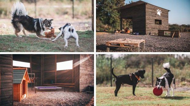 Le centre aéré créé par Claire et Tom Depirou accueille jusqu'à neuf chiens en simultané.
