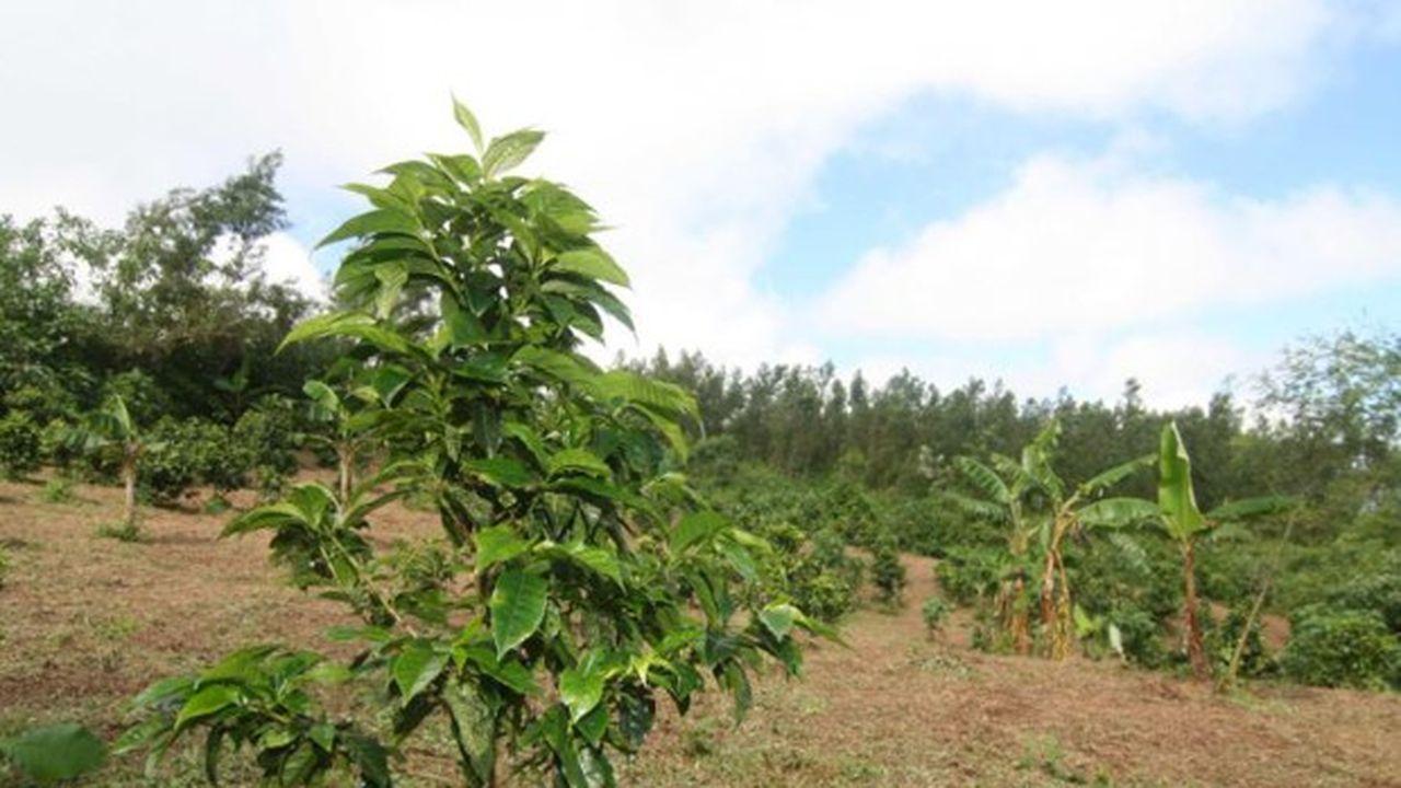 Les agriculteurs de Saint-Pierre, de Salazie et de la Possession sont les plus affectés.