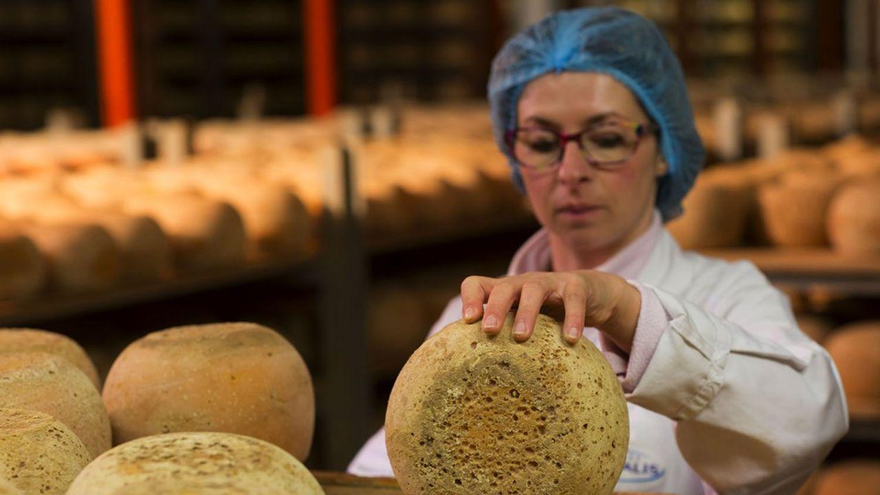 Le contrôle du bon affinage des fromages par le brossage de la croûte, un des gestes à maîtriser par les salariés de Lactalis.