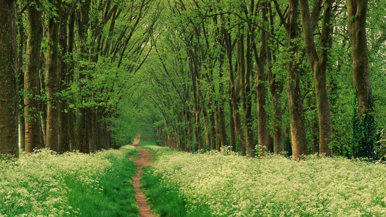 Bois et forêts: viser les massifs les plus haut de gamme.