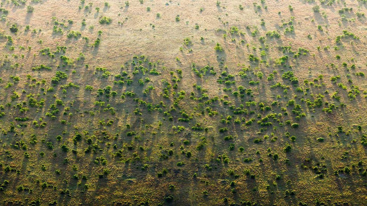 L'ambition du projet de la «Grande muraille verte» en Afrique est de restaurer 100millions d'hectares de terres dégradées, de séquestrer 250millions de tonnes de carbone et de créer 10millions d'emplois verts dans les zones rurales d'ici à 2030.