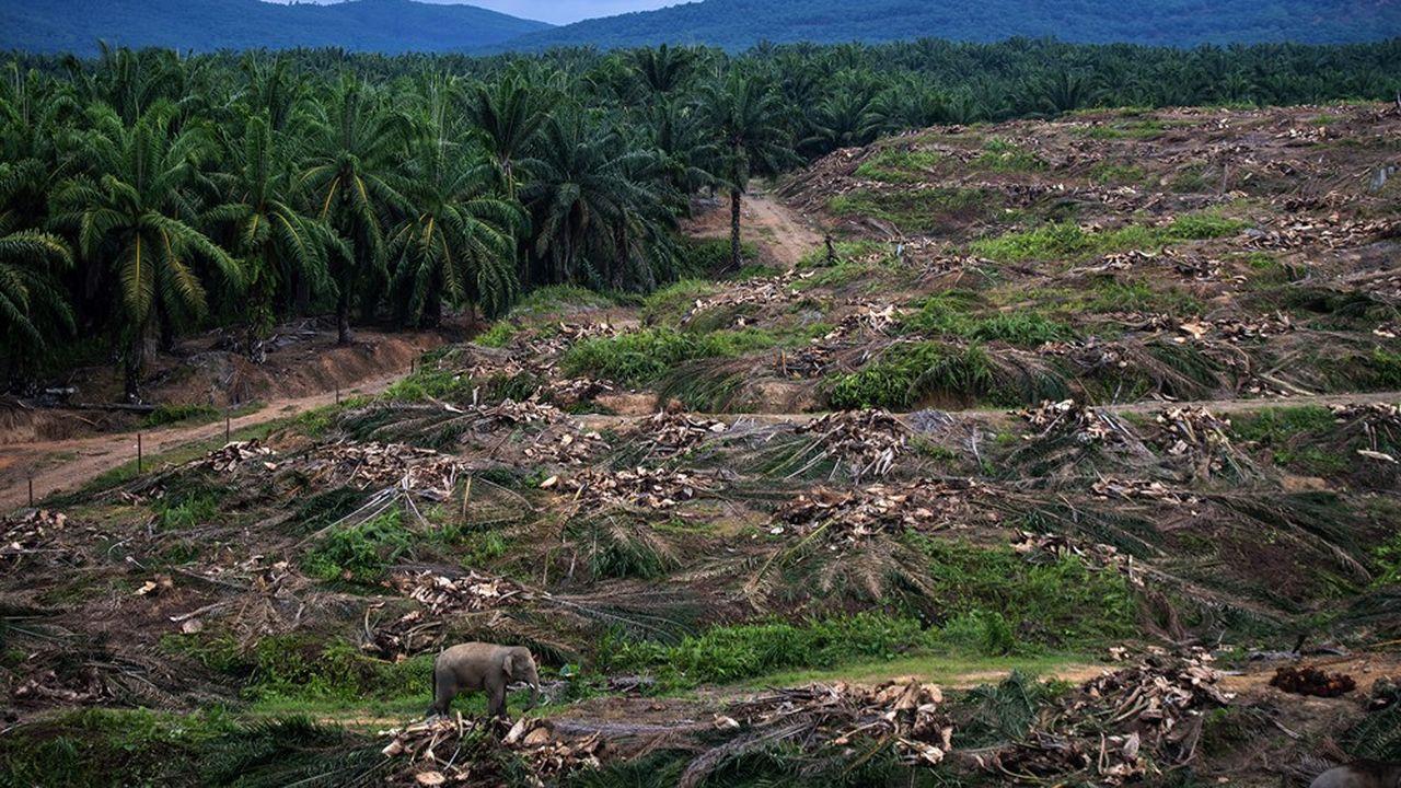 L'organisation WWF a identifié 24 fronts sur la planète, comme ici à Bornéo, où non seulement la déforestation atteint son summum, mais aussi où la forêt qui subsiste est très dégradée et peine à garder le même niveau de services écosystémiques.