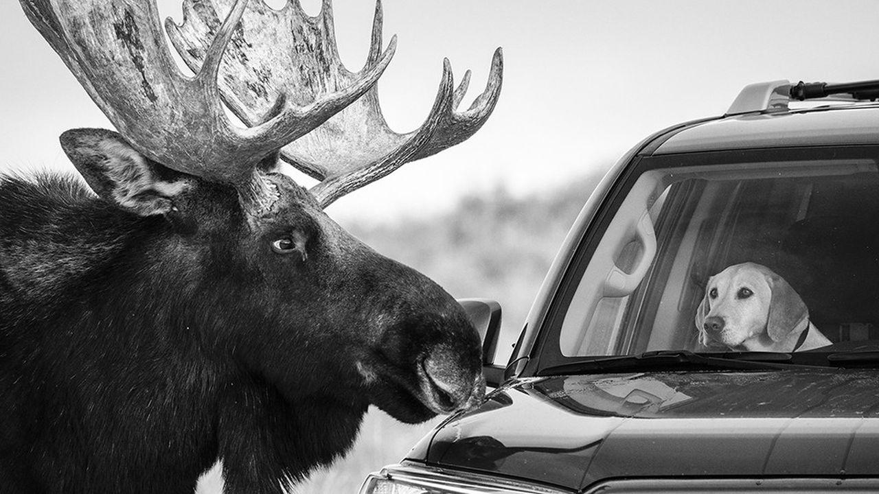 Guillermo Esteves est en lice pour le prix du Photographe nature de l'année, avec ce cliché pris dans le parc national de Grand Teton, dans le Wyoming.