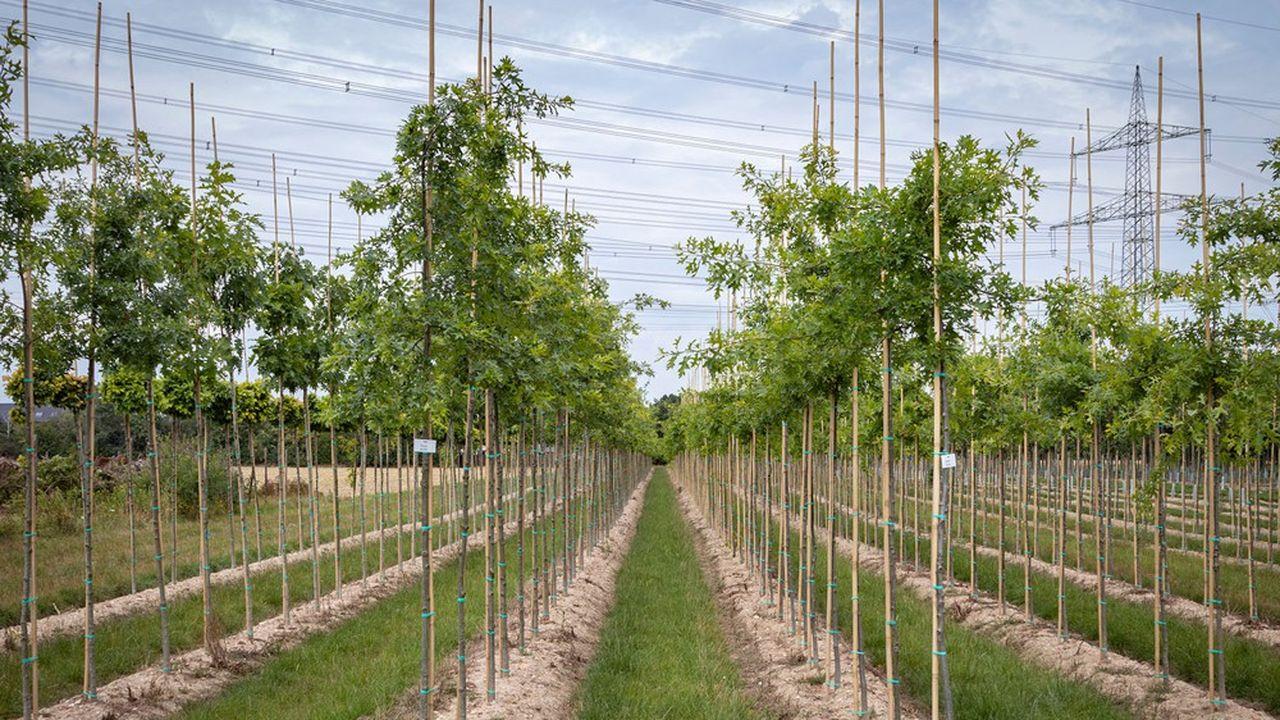 8.000 grands arbres sont attendus, d'ici à 2025 dans les espaces publics nouvellement aménagés de Saclay
