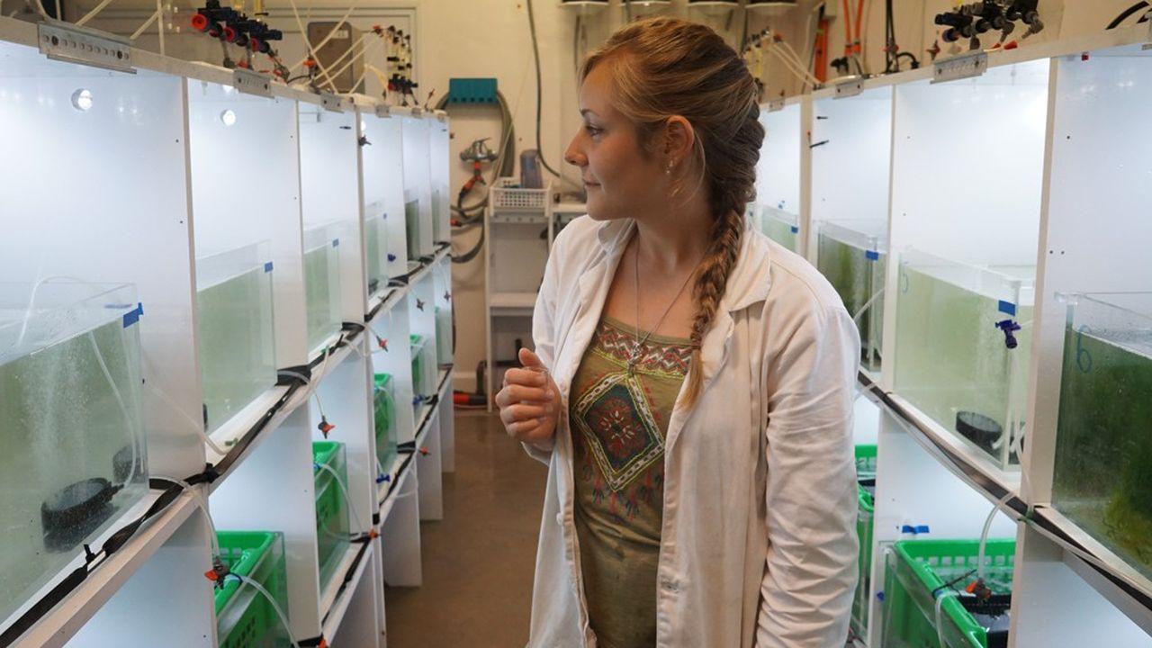 Dans son laboratoire, à Plouzané (Finistère), la doctorante veille sur ses huîtres, support de sa thèse intitulée « L'influence des êtres vivants sur le risque de maladie dans les écosystèmes marins »