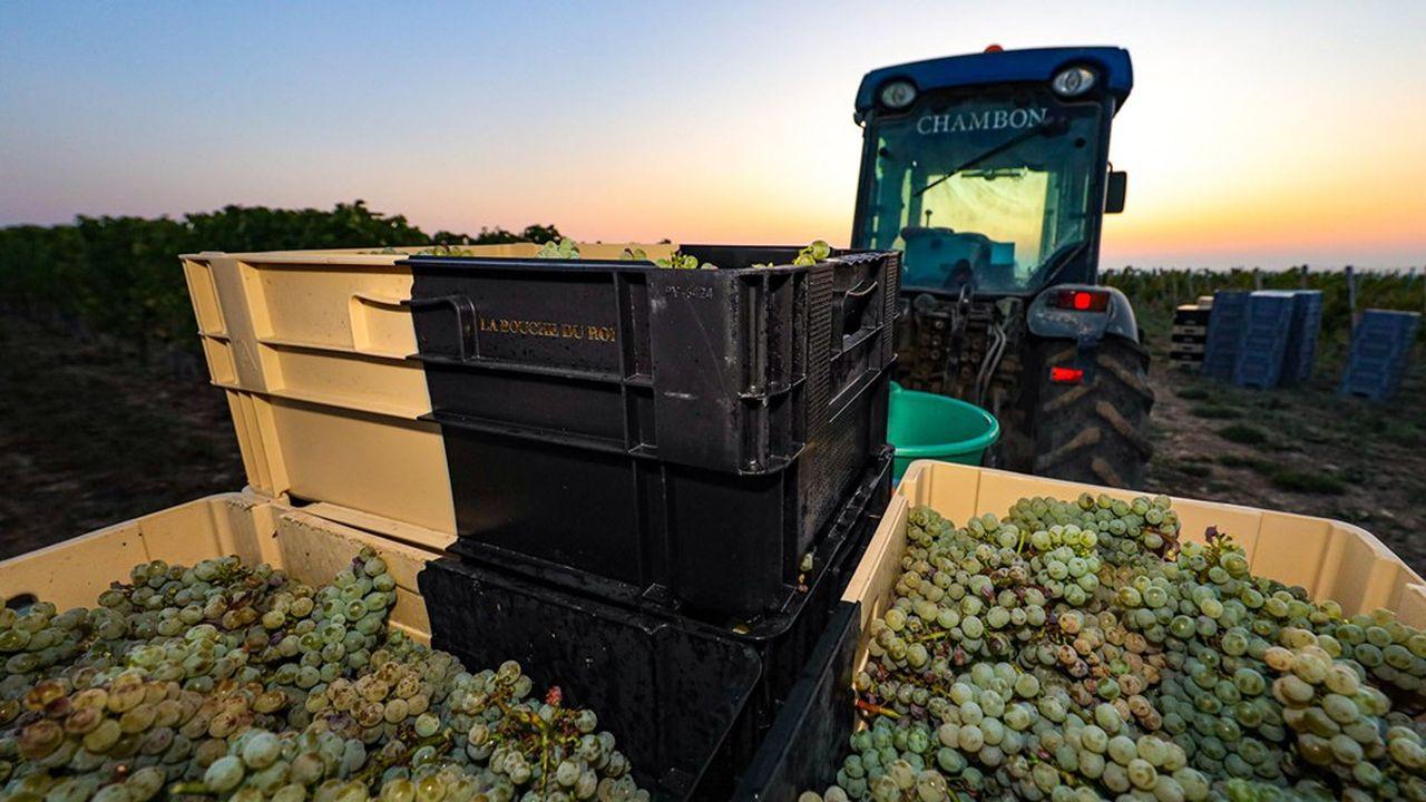 Plus délicate à mener, la vigne bio requiert plus de connaissances agronomiques, parce qu'elle repose moins sur les protections chimiques.