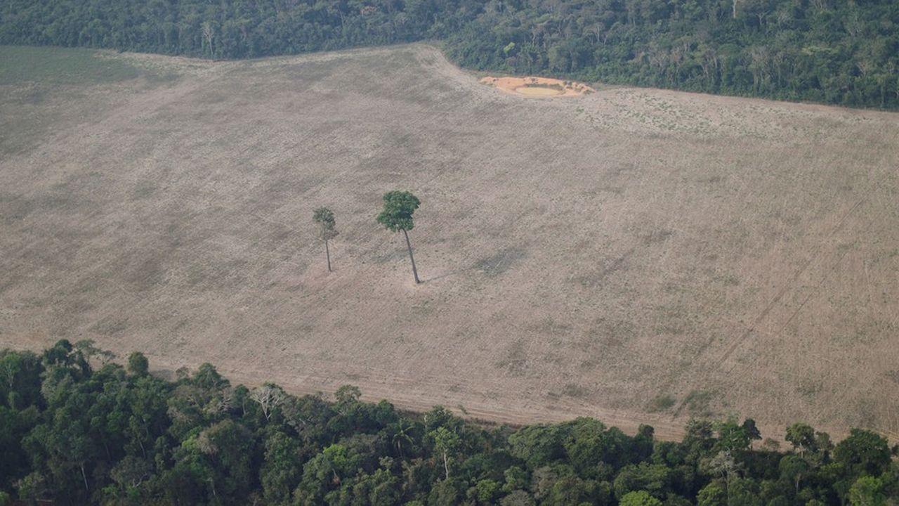 La déforestation dans le monde est responsable de 12% des gaz à effet de serre.